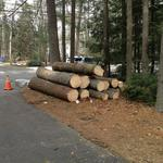 Tree Removal.  Simsbury, CT 2013
